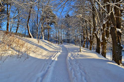 winter cold nature forest landscape nikon frost path lumi talvi maisema lunta luonto nikond3200 polku pakkanen d3200 talvimaisema