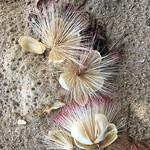 Цветы под кокосом