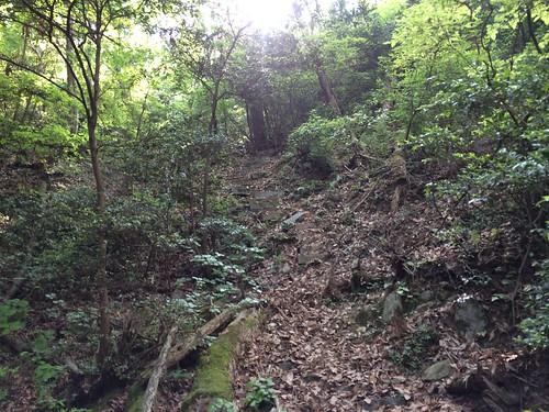 大谷山 (4).20150526.1511