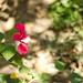 Jardí botànic - Jardín botánico