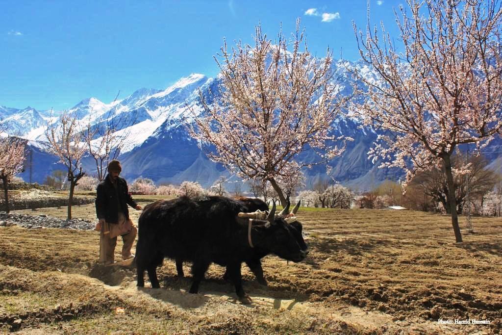 Spring At Khapulo Gilgit Baltistan