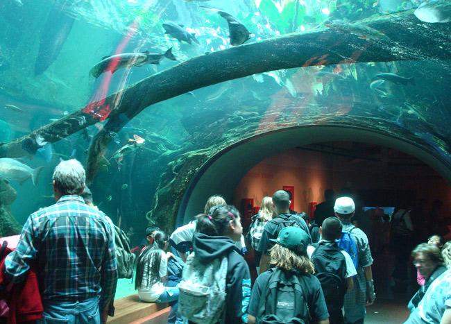 aquarium-underneath