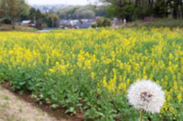 2016/04/10_薬師池公園-22