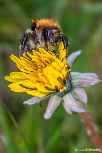 Day121Bumble_Bee_Says_Hi