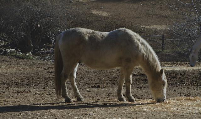 horse in Cercedilla, Spain (2015)