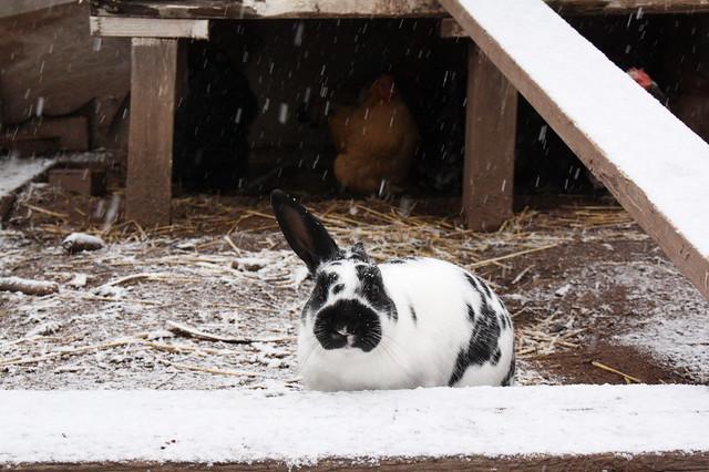 A happy snow bunny