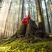 Woodland Magic by Elizabeth Gadd