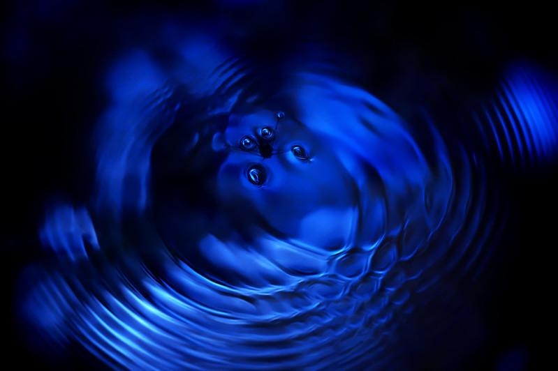 a water strider