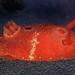 Blood-spot Dorid (Aldisa sanguinea) by Ron Wolf
