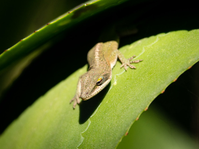 lizard between leaves