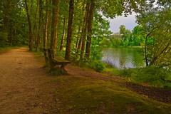 Sur le bord de l'étang de Saint-Malo-de-Beignon - Breizh - Photo of Comblessac