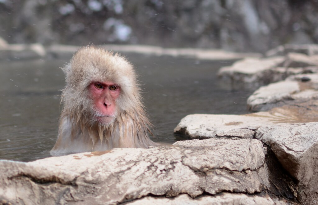how to get to snow monkey park japan