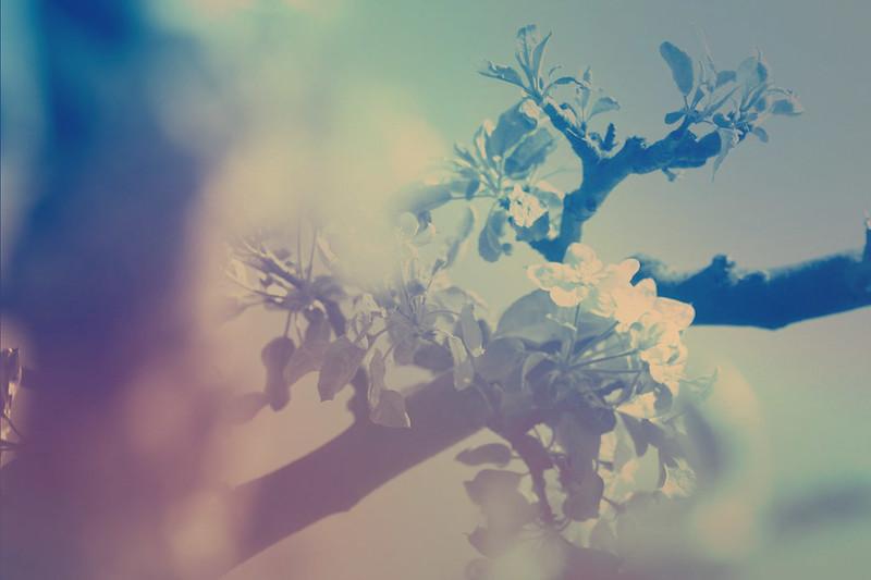 blur-dreamy-texture-texturepalace-23
