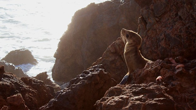 Baby Sea Lion Taking in the Sun