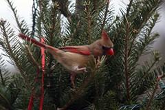 outdoor christmas tree IMG_4741