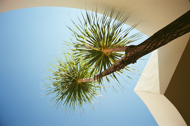 shower palms