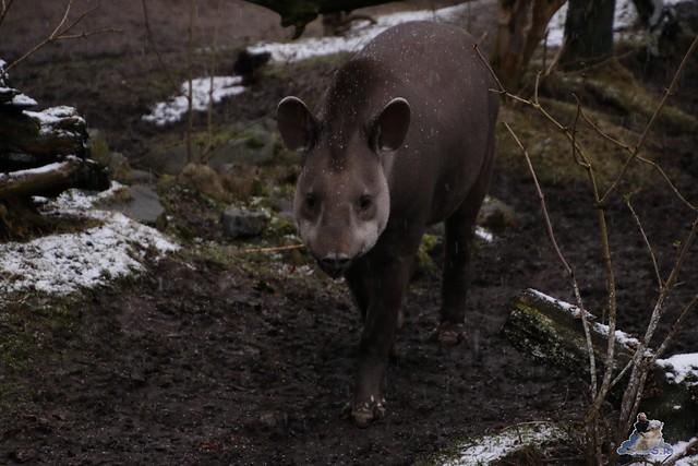 Tierpark Hagenbeck 16.01.2016  131