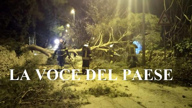 rutigliano albero caduto