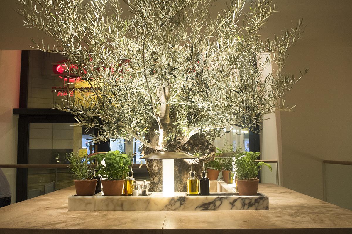 olive-tree-vapiano-manchester