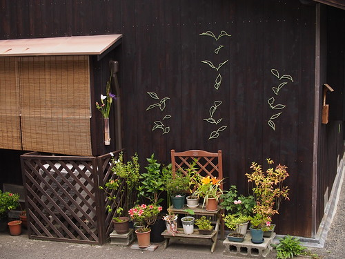 P6141055 string and garden