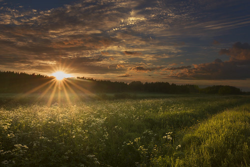 flowers sunset summer sky sun sunlight beautiful field clouds last suomi finland landscape ray bugs rays wildflower beams sunray sunbeams kerava milamai maijuleenatommila