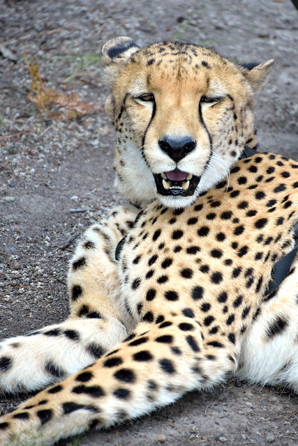 South Africa_443