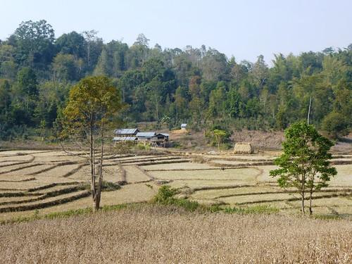 M16-Kyaukme-Palaung-Lwe Sar (1)