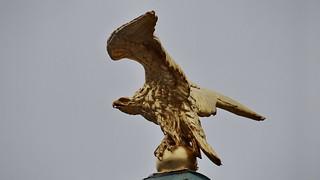 Adler mit ausgebreiteten Flügeln in Wien 01779