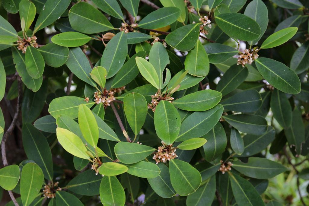 Mari Mengenal Hutan Mangrove | KASKUS