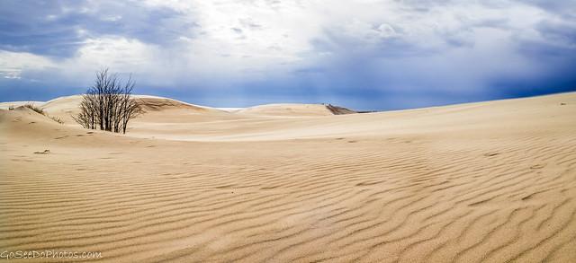 Sand Dune Panorama