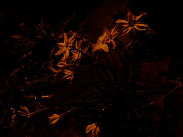 427 - wisteria2-kozo