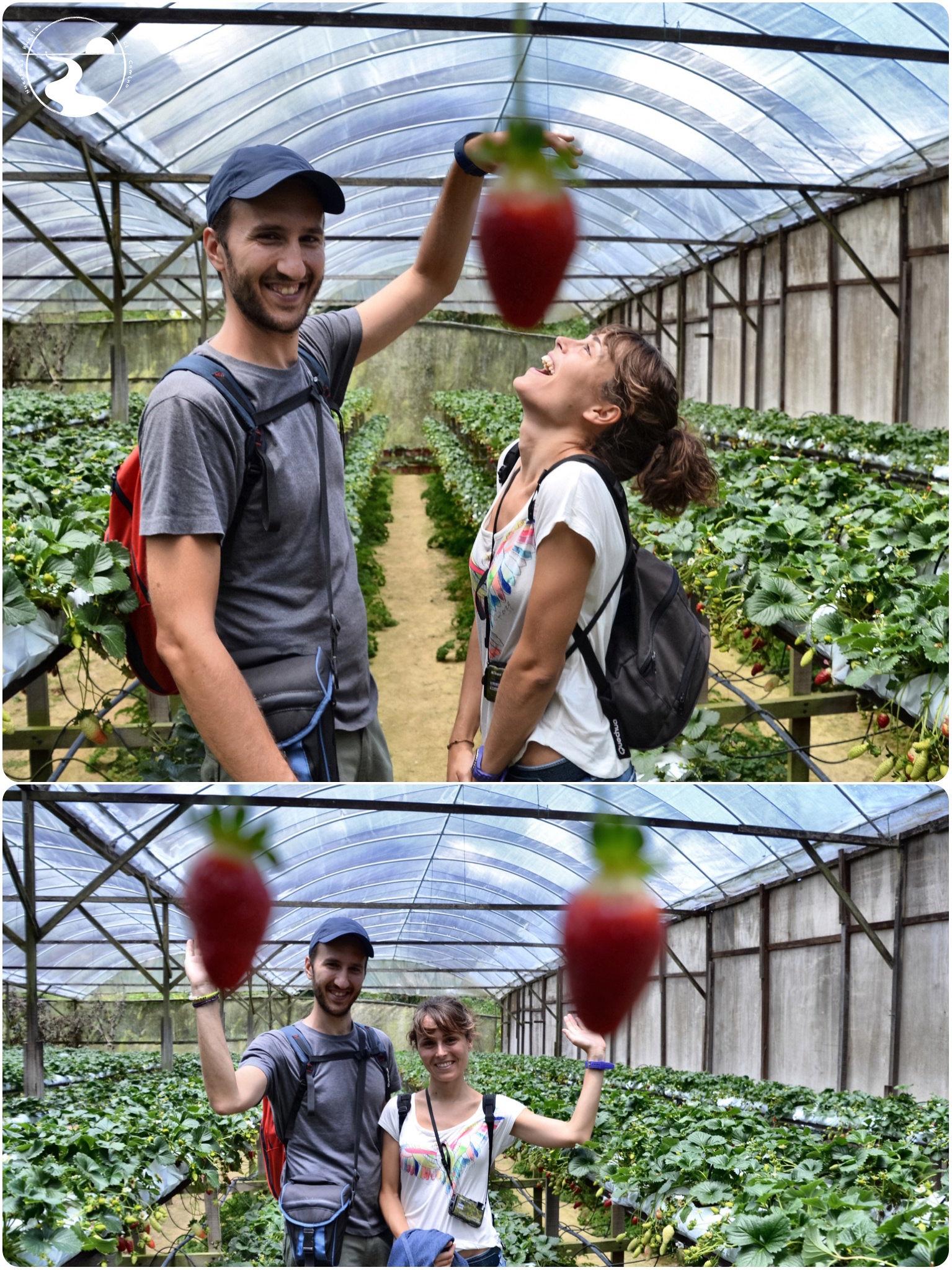 Haciendo el tonto con las fresas
