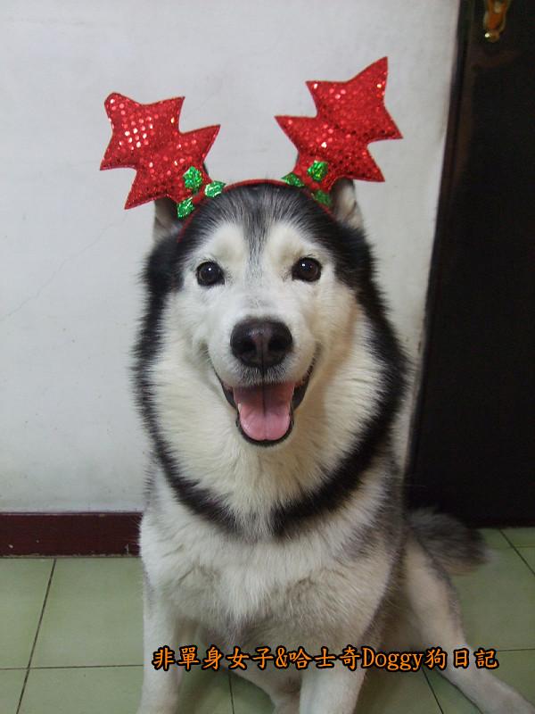 Doggy聖誕節紅色聖誕樹髮箍裝扮01