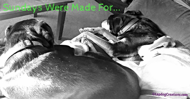 Sundays Were Made For Naps and Snuggles, senior hound mixes Doberman puppy #rescueddogs #adoptdontshop #LapdogCreations #BlackandWhiteSunday #dogs ©LapdogCreations