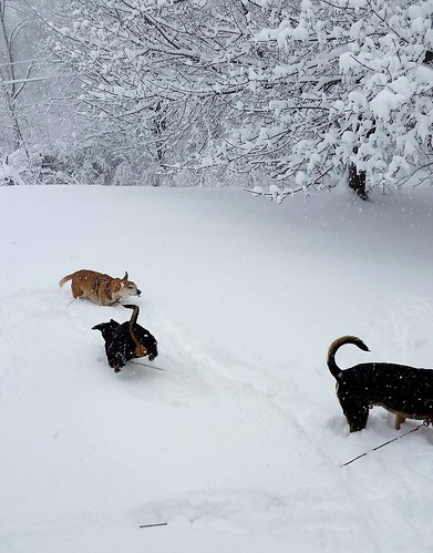 rescued dogs, dogs in snow, #adoptdontshop #snowdogs #LapdogCreations