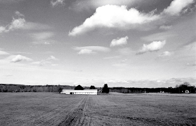 Dairy Farm under Fluffy Clouds_