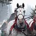 <p><a href=&quot;http://www.flickr.com/people/93892755@N02/&quot;>kaprysnamorela</a> posted a photo:</p>&#xA;&#xA;<p><a href=&quot;http://www.flickr.com/photos/93892755@N02/24899398046/&quot; title=&quot;Pair Of Horses In Harness&quot;><img src=&quot;http://farm2.staticflickr.com/1454/24899398046_e508f2fb93_m.jpg&quot; width=&quot;240&quot; height=&quot;135&quot; alt=&quot;Pair Of Horses In Harness&quot; /></a></p>&#xA;&#xA;