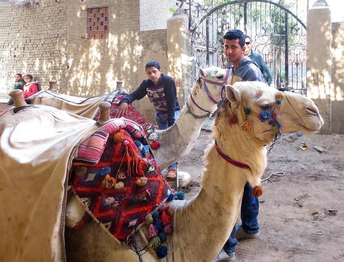 CamelRide1-25