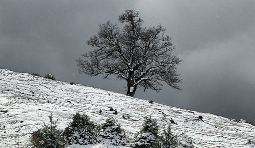 winter wild cloud mountain snow cold tree ice nature landscape james countryside bush branch country hill harvest falling mountaineering lonely icy wintertime flakes cloudscape slope steep lonelytree barclay bjh grevena ελλάδα φύση τοπίο βουνό χιόνι όρη χιόνια δέντρο barclayjamesharvest σύννεφο βουνά greeklandscape κρύο μοναξιά παγωνιά πάγοσ λόφοσ χειμώνασ greekflora όροσ ορίζοντασ γρεβενά ελλάδασ χλωρίδα αέρασ μαυρίλα μοναχικό χειμερινό ελληνικότοπίο