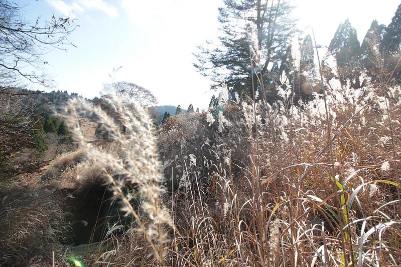 20141122-武奈ヶ岳&京都ライトアップ-0361.jpg