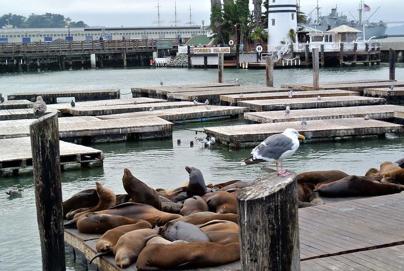 Leones marinos del muelle 39 en San Francisco #JFashionblog