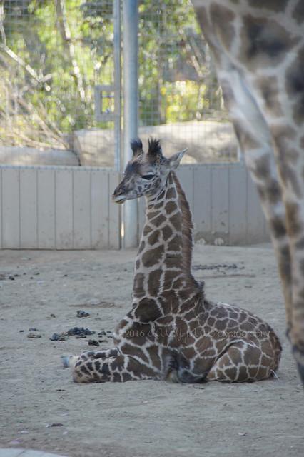san diego zoo-125web