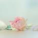 Paper Roses? - Explore 31/01/16 by paulapics2