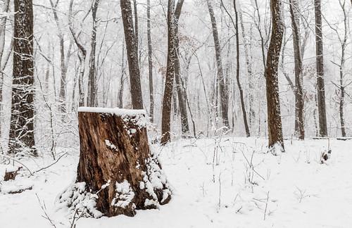 snow nature forest landscape us newjersey woods unitedstates snowstorm nj stump highkey snowing eastbrunswick dallanbach