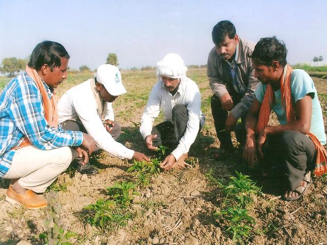 अपनी नर्सरी में किसानों को प्रशिक्षण देते दिलीप सिंह