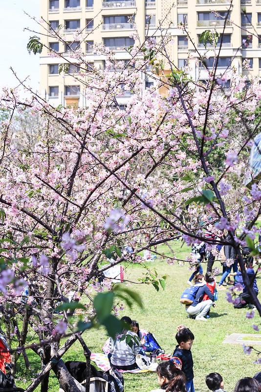 新竹公園的賞櫻人潮
