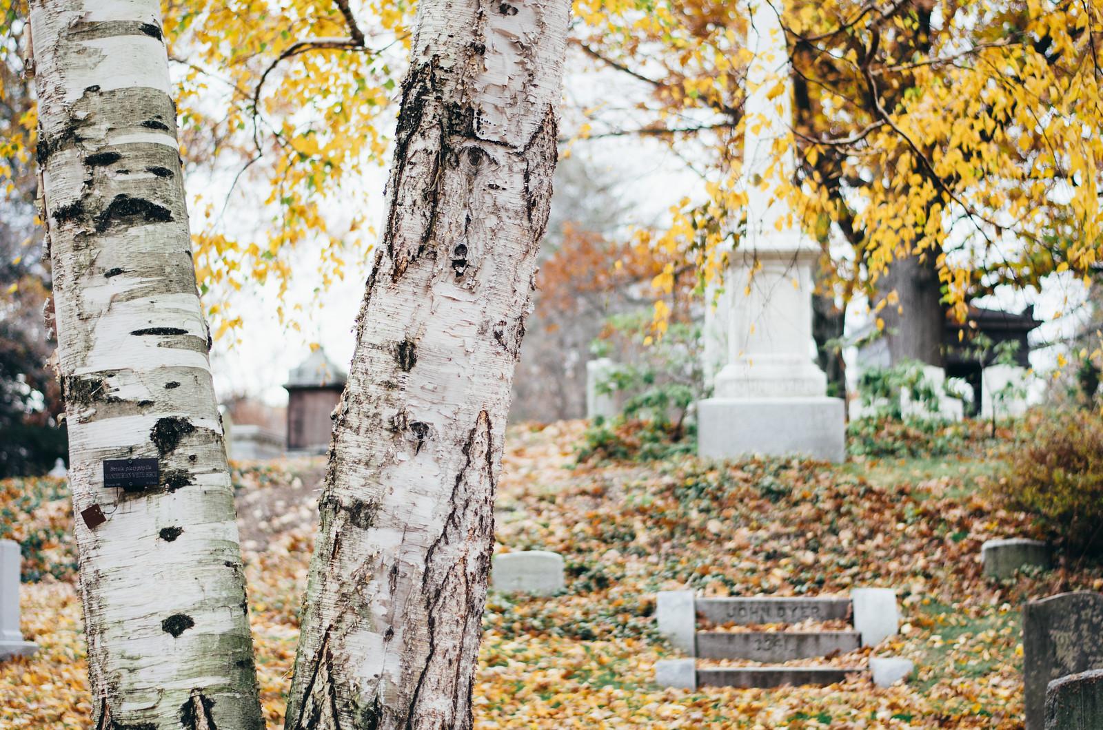 Mount Auburn Cemetery on juliettelaura.blogspot.com