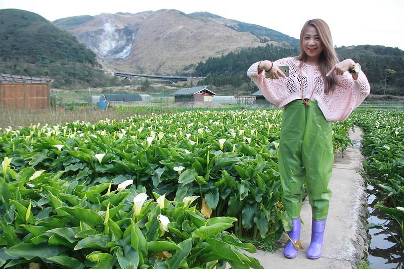 竹子湖採海芋-17度C隨拍 (27)