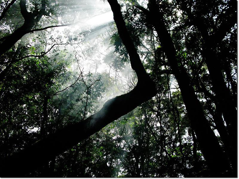 魔幻森林營地