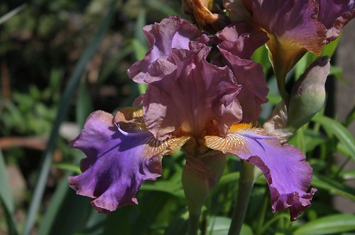 Iris Ostrogot- Peyrard 93